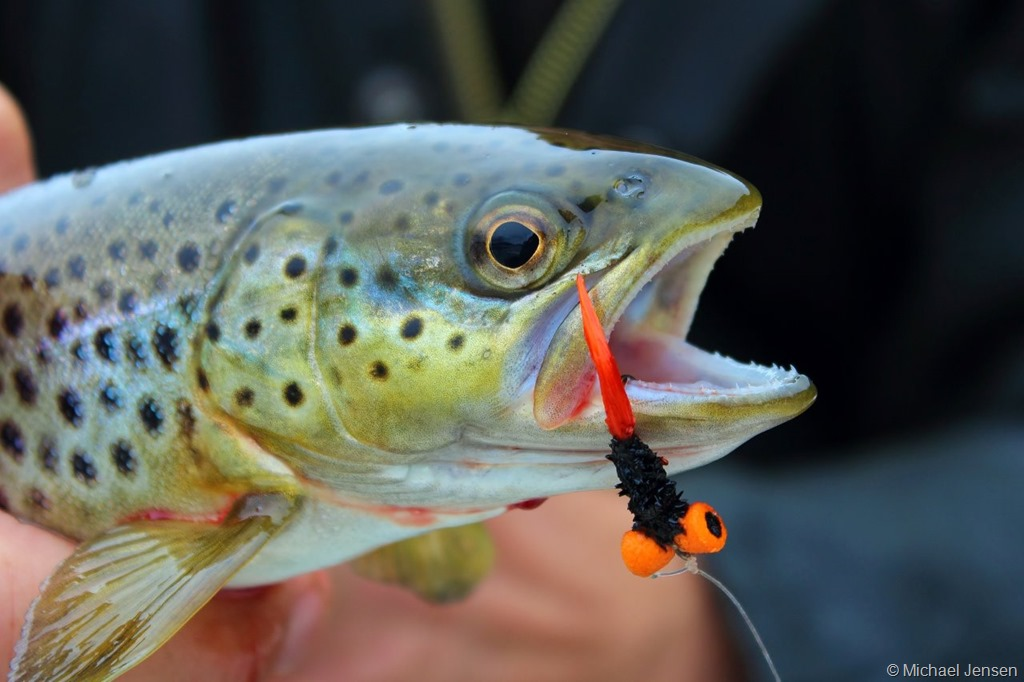 Sinking Fly Line And The Booby Fly Michael Jensens Angling