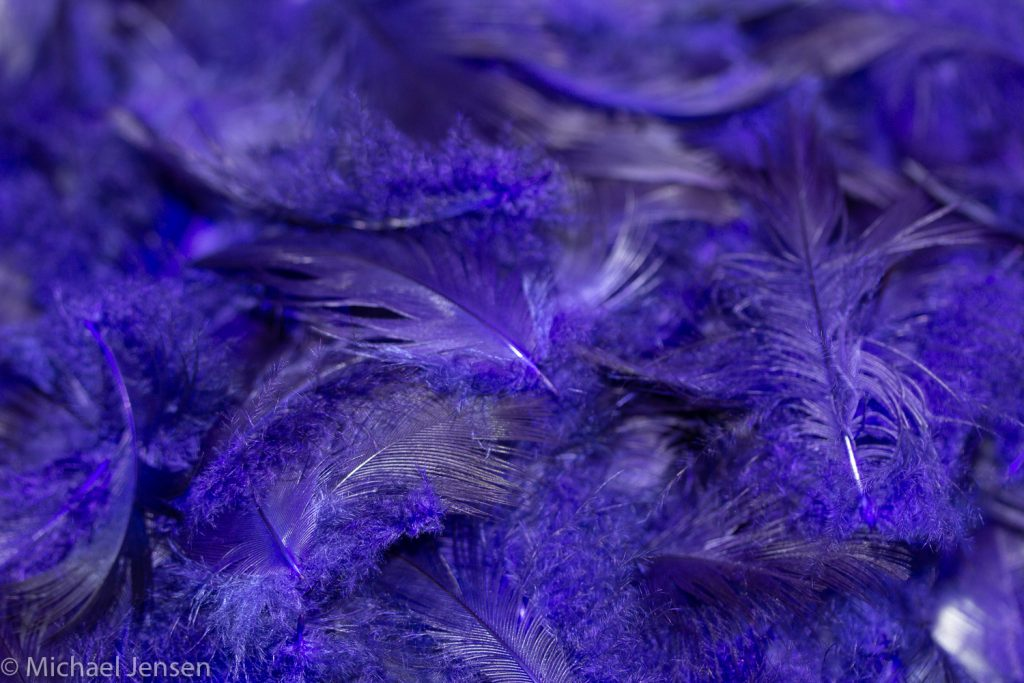 Dyed and dried feathers - pukeko substitute