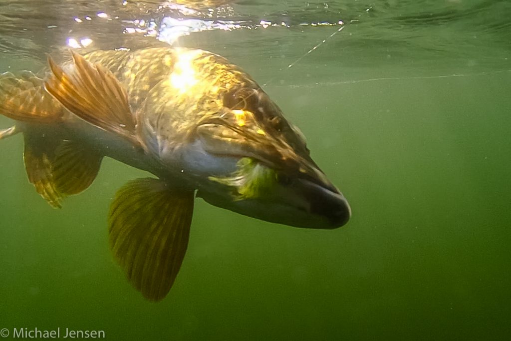 Why you need bucktail jigs Pike under water